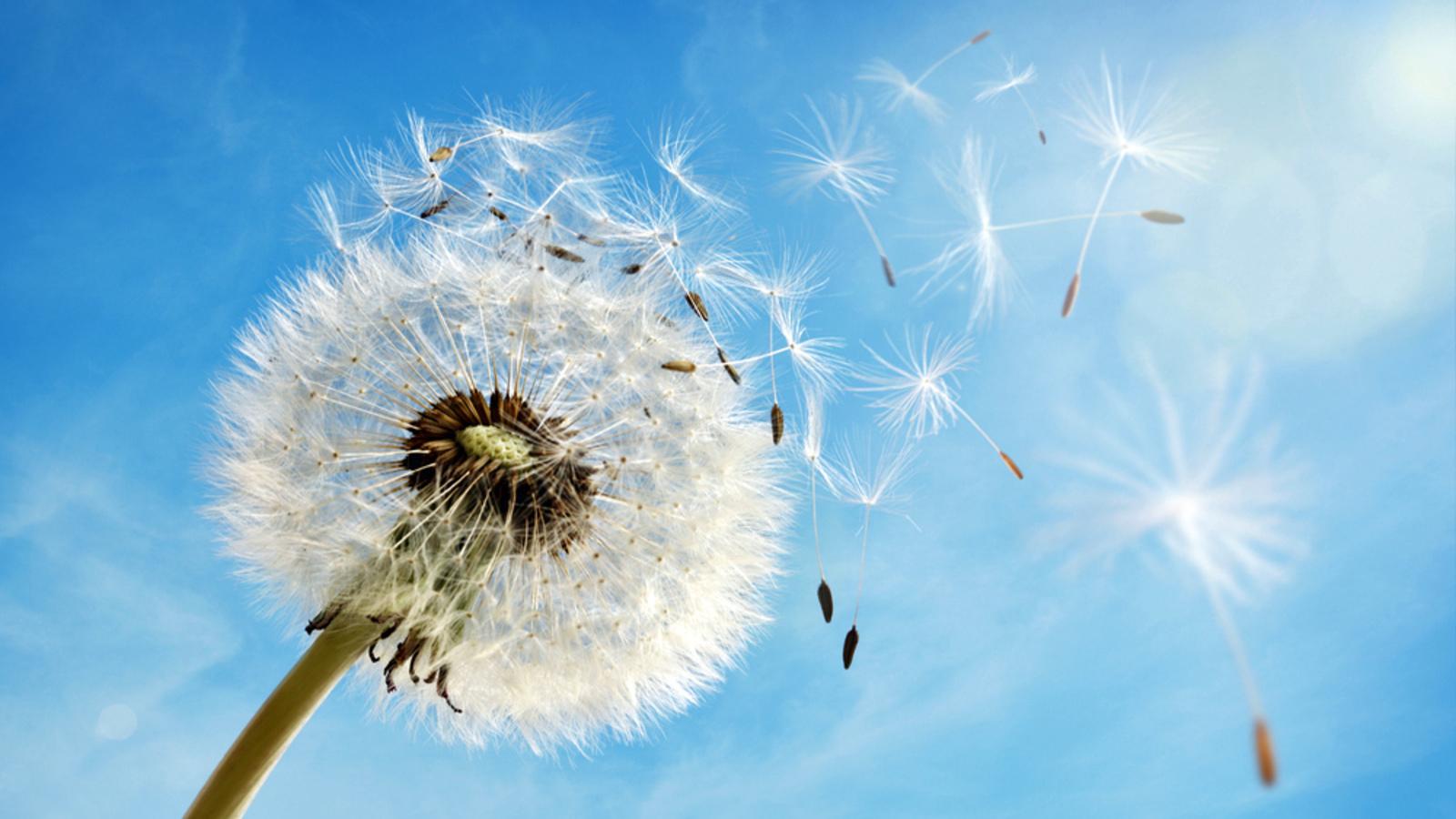 Hypnose-Fragen: Bild von Pusteblume deren Samen Richtung Himmel fliegen